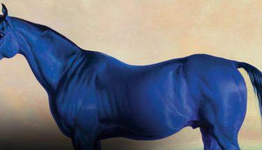 imagen de visitlex caballo azul